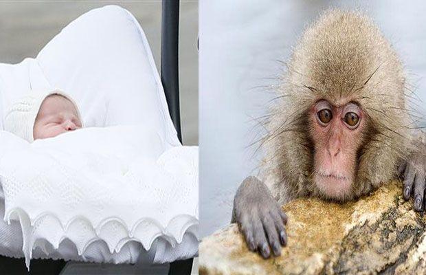 Charlotte-monkey