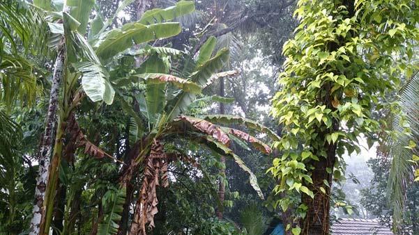 Mangalore_Havey_Rain_7