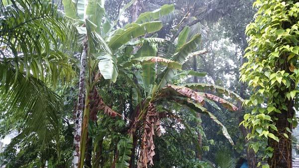 Mangalore_Havey_Rain_8