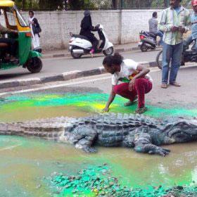 crocodile-fi