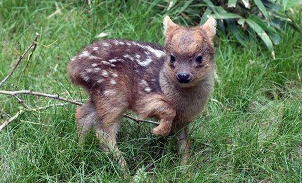 deer45