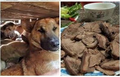 dog_meat_Story