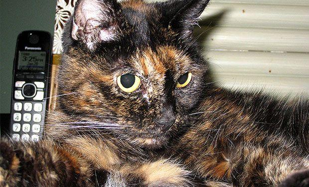 oldest-cat