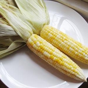 corn_images
