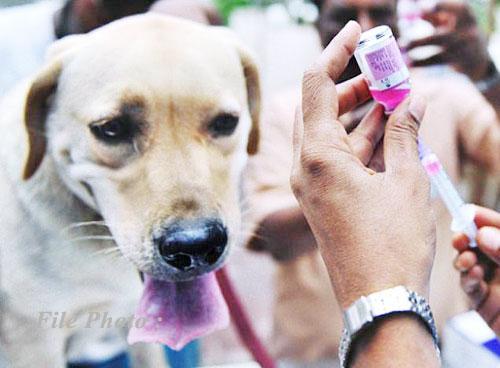 rabies_dog_vaccin