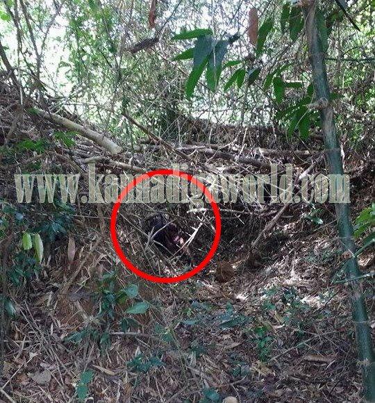 Kndpr_Belve_Lady Murder suspect (4)