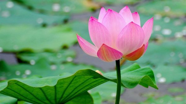Importance Of Sacred Plants And Trees Kannadiga World
