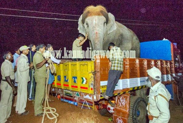 Udupi_Elephant_subhadre