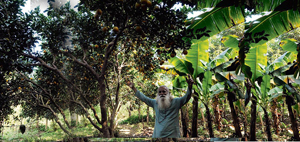 organic-farm-web