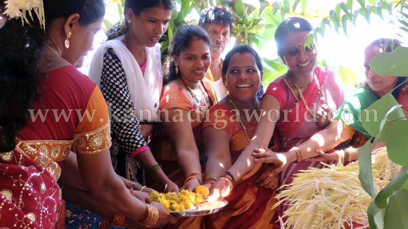 Kundapura_Ashwaththa Tree_Mariage (1)