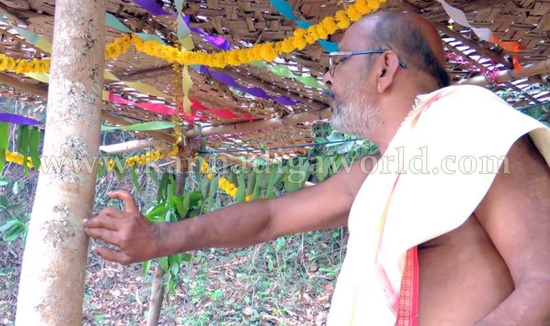 Kundapura_Ashwaththa Tree_Mariage (16)