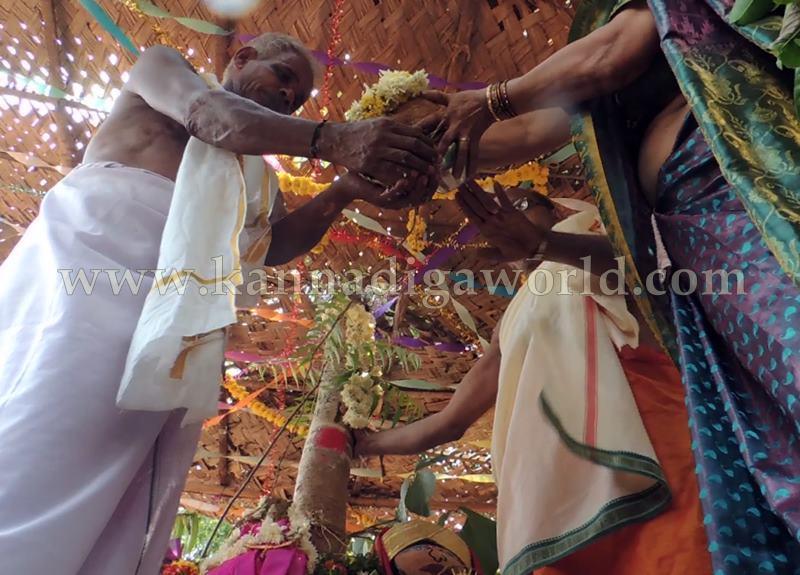 Kundapura_Ashwaththa Tree_Mariage (24)