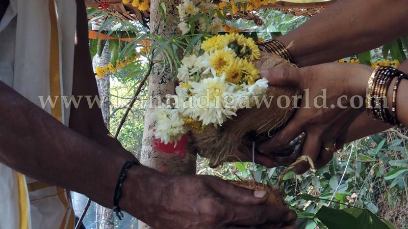 Kundapura_Ashwaththa Tree_Mariage (25)
