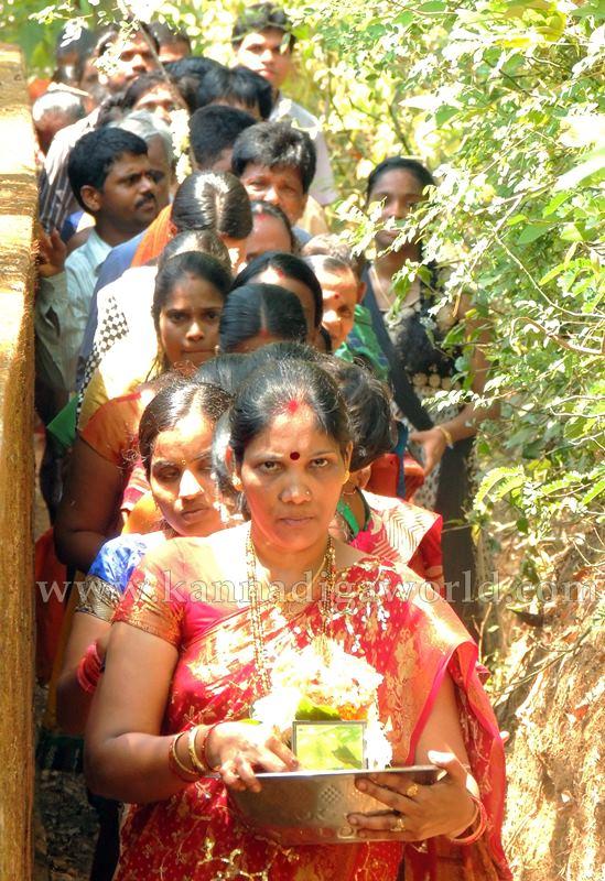 Kundapura_Ashwaththa Tree_Mariage (6)