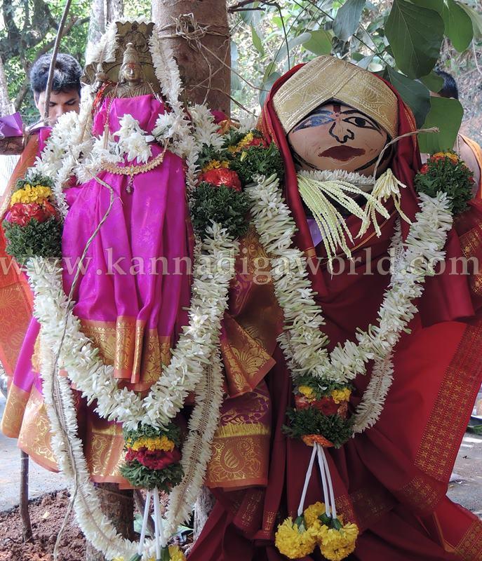 Kundapura_Ashwaththa Tree_Mariage (8)