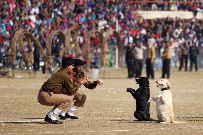 Indian Border Security Force Dog Squad personnel take part in a march during Republic Day celebrations in Jammu. India celebrated its 65th Republic Day with a large military parade in the capital New Delhi and similar events across the country.