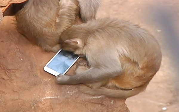 monkey_with_mobil