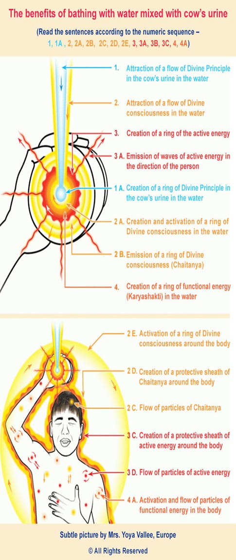 Importance of Gomutra (Cow Urine) In Ayurveda with Additional