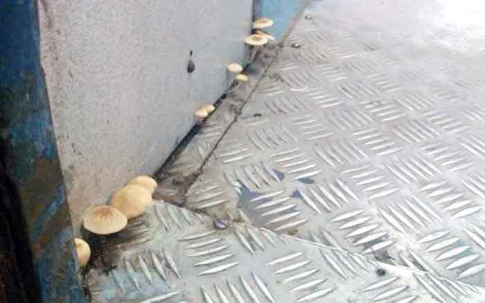 mushrooms_in_train1