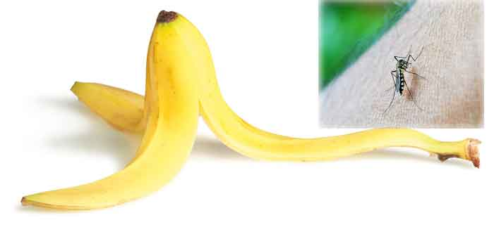 banana_peel_mosquit