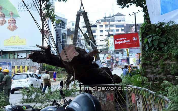 tree_fall_injury_8
