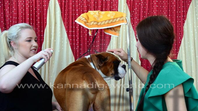dog_show_mlore_7