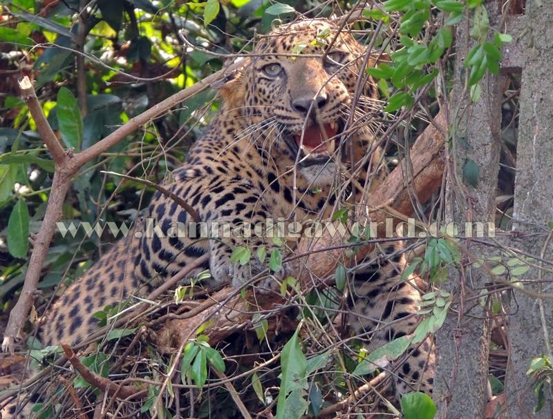 kundapura_operation_cheetha-17