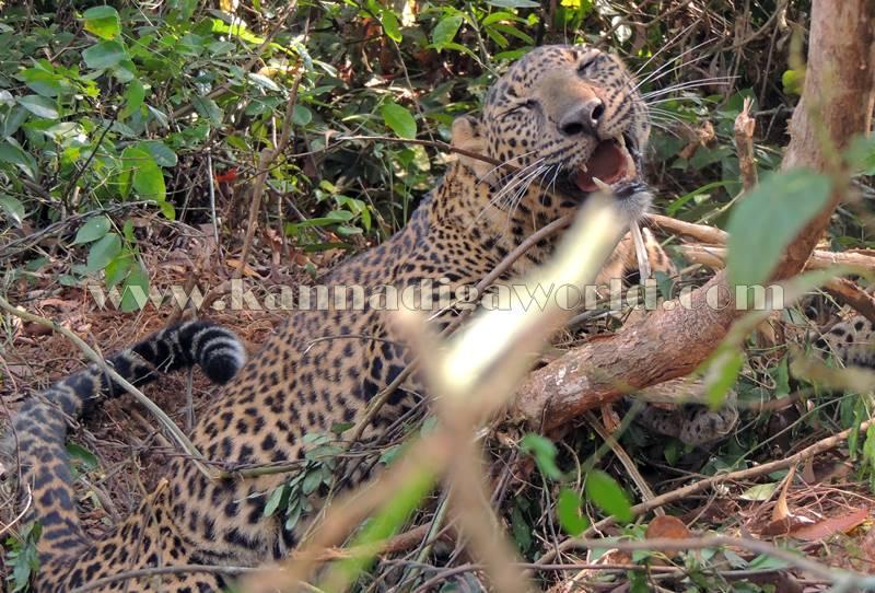 kundapura_operation_cheetha-19