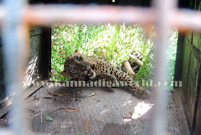 kundapura_operation_cheetha-24