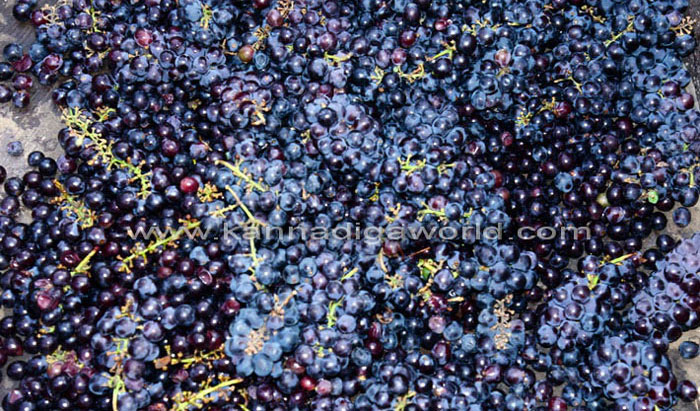 wine_mela_kadri_12