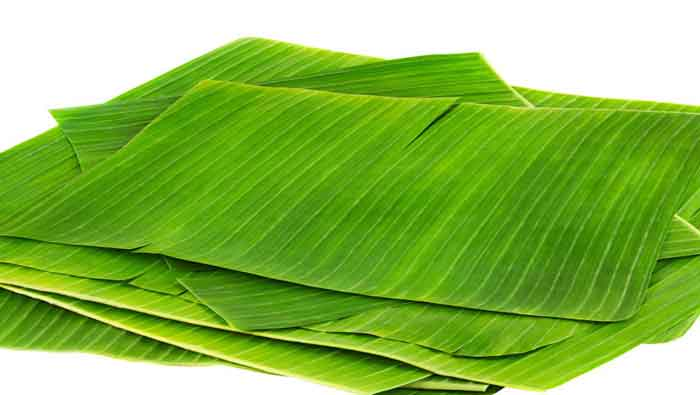 bannana_leaf_spl