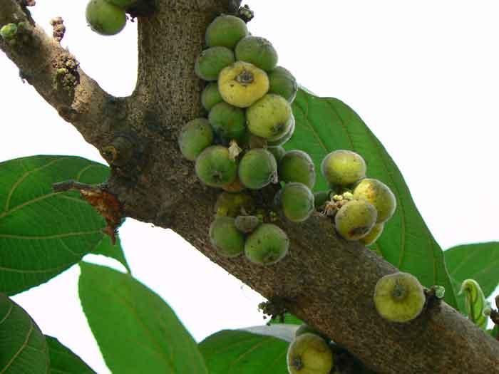 fig_atti_tree1