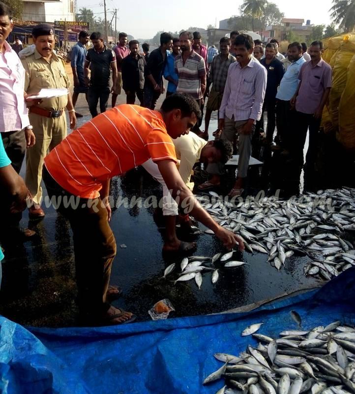 kundapura_fish-lorry_pulty-1