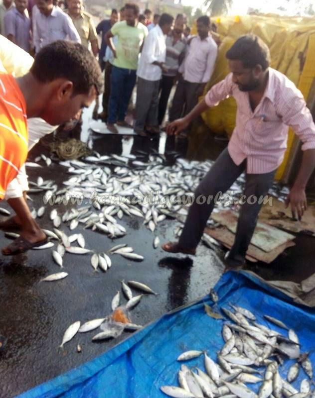 kundapura_fish-lorry_pulty-10