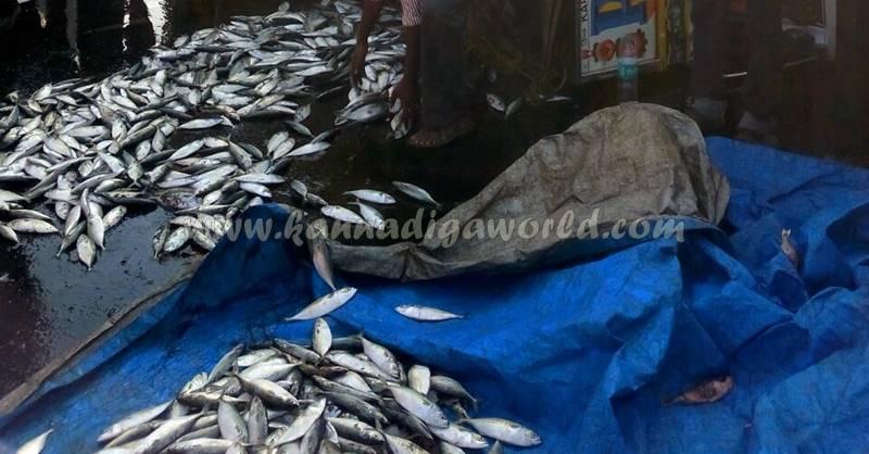 kundapura_fish-lorry_pulty-9
