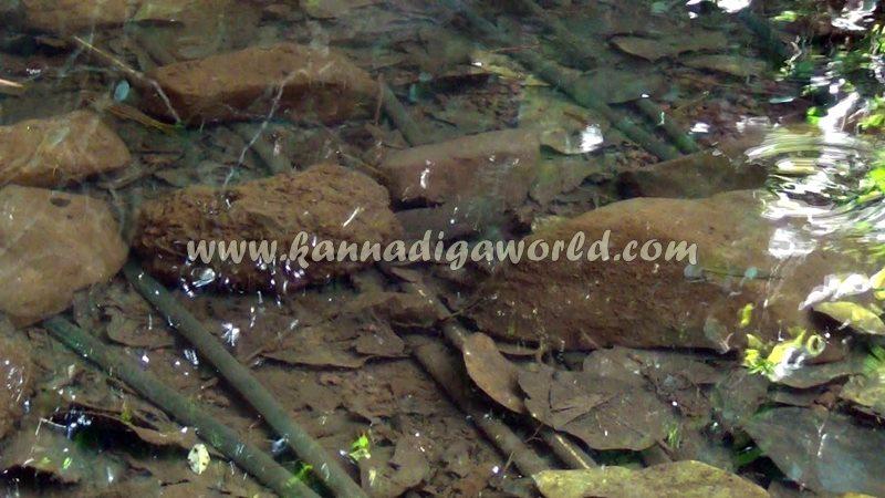kundapura_fresh_water-4