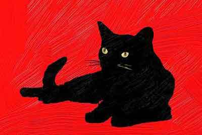 pic_black_cat