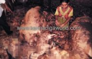 ಕುಂದಾಪುರದ ಹೆಂಗವಳ್ಳಿಯಲ್ಲಿ ಸಿಡಿಲು ಬಡಿದು ಕರು ಸಹಿತ 3 ಜಾನುವಾರುಗಳು ಸಾವು