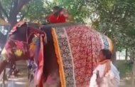 ಆನೆ ಮೇಲೆ ಕುಳಿತು ಯೋಗ ಮಾಡಲು ಹೋಗಿ ನೆಲಕ್ಕೆ ಬಿದ್ದ ಬಾಬಾ ರಾಮದೇವ್: ವಿಡಿಯೋ ವೈರಲ್